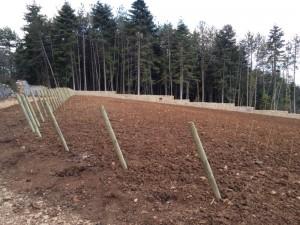 plantation_clos-de-l-ermitage_mars2016 (1)